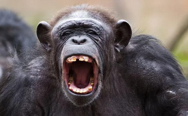رؤية القرود في المنام