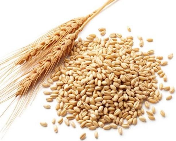 معلومات عن فوائد جنين القمح