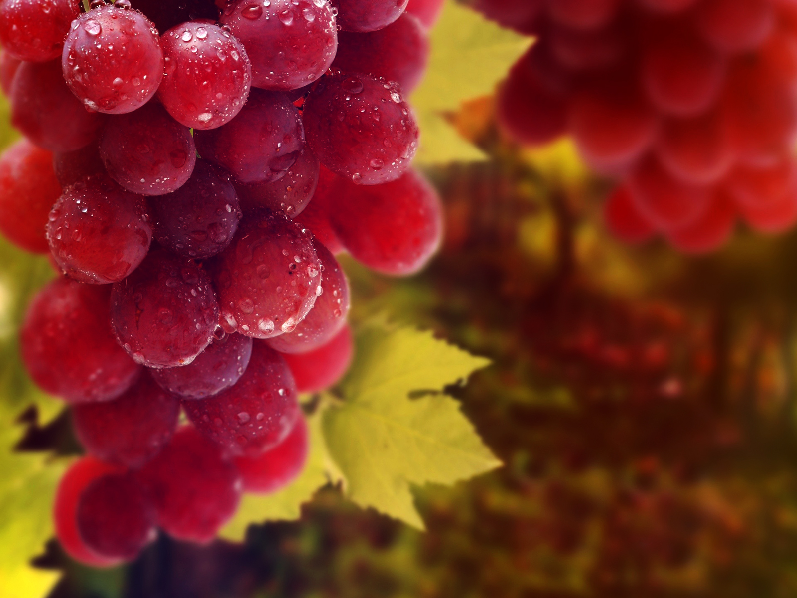 العنب الأحمر في المنام للمتزوجة