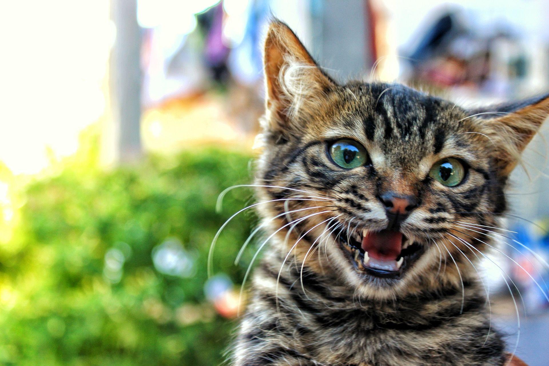 تفسير حلم خربشة القطة