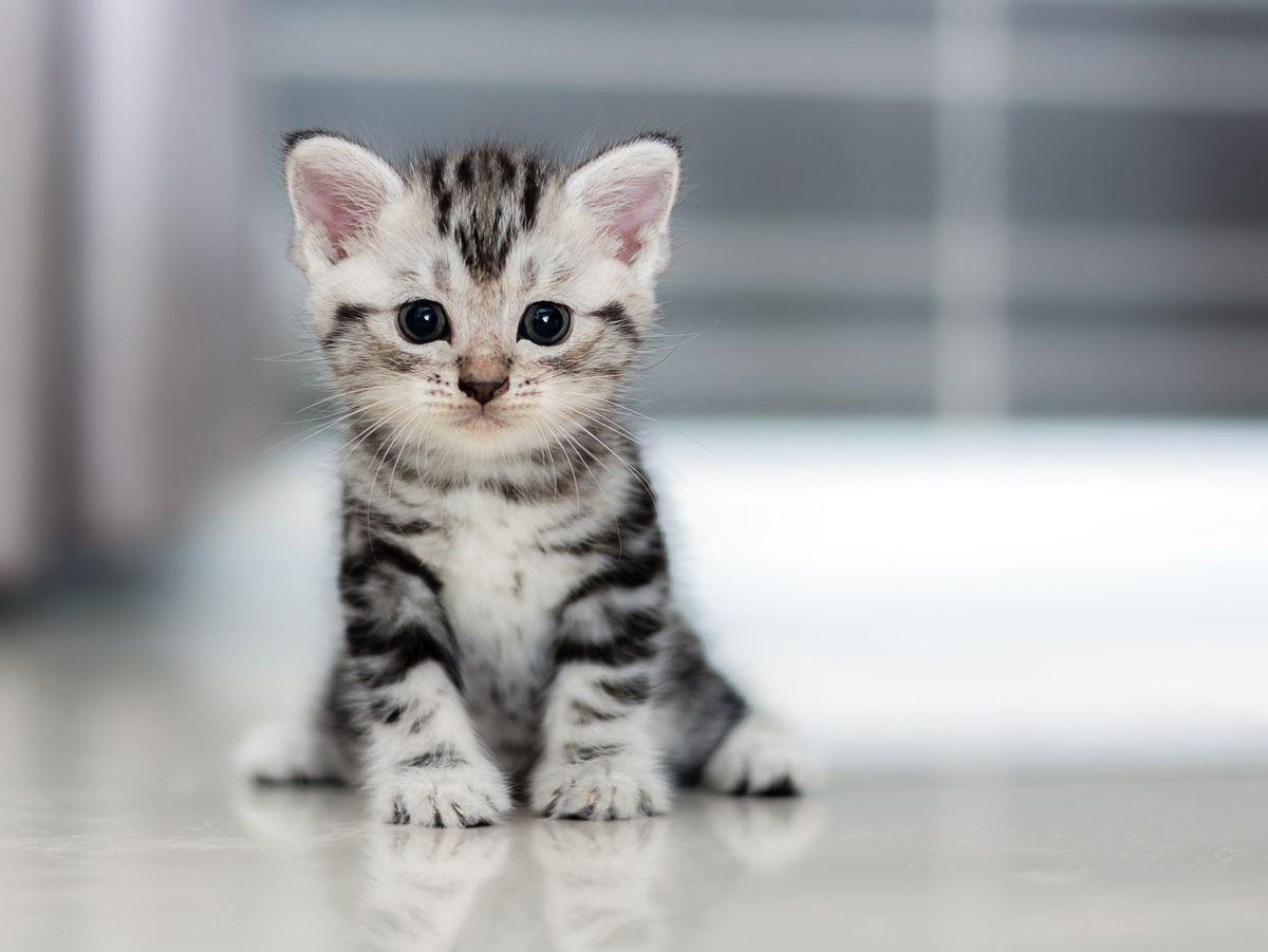 رؤية القطط الصغيرة في المنام للعزباء
